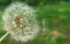 Naturopath Allergy treatment