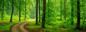 Allergy Season is Here! - Naturopathic Doctor Maple Ridge
